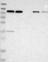 NBP1-90207 - NALP3