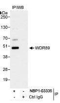 NBP1-03335 - WDR89