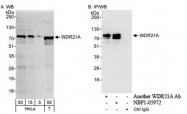 NBP1-05972 - WDR21A