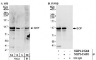 NBP1-05984 - GCF / TCF9