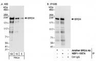 NBP1-18874 - BRD4