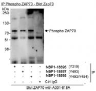 NBP1-18896 - ZAP70