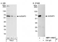 NBP1-18921 - ARFGAP3