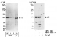 NBP1-19092 - INTS3