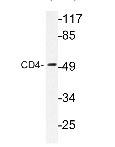 NBP1-19371SS - CD4
