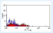 NBP1-21435 - CD160