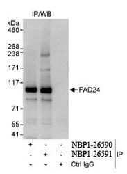 NBP1-26590 - NOC3L