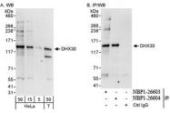 NBP1-26603 - DHX30