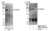 NBP1-26616 - ARID4A