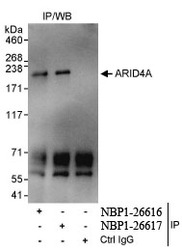 NBP1-26617 - ARID4A