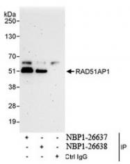 NBP1-26638 - RAD51AP1
