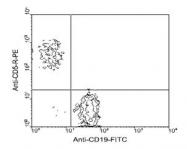 NBP1-26706 - CD5