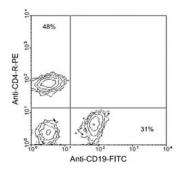 NBP1-27892 - CD19