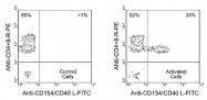 NBP1-27967 - CD154 / CD40L