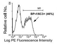 NBP1-28053 - CD249 / Glutamyl aminopeptidase