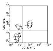 NBP1-28173 - CD122 / IL2RB