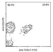 NBP1-28276 - T Cell Receptor (TCR) gamma/delta