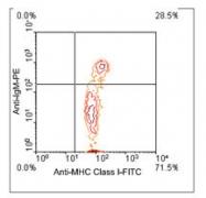 NBP1-28305 - MHC Class I