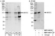 NBP1-46210 - NFATc4 / NFAT3
