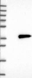 NBP1-83554 - NMRAL1