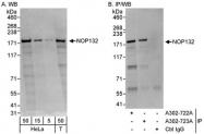 NBP1-46849 - NOL8
