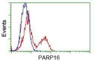 NBP1-47906 - PARP16