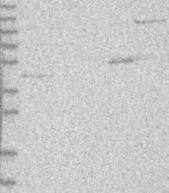 NBP1-83817 - PCMTD1