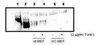 NBP1-78017 - PIK3CD
