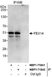 NBP1-71841 - Peroxin 14 / PEX14