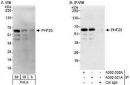 NBP1-28746 - PHF23