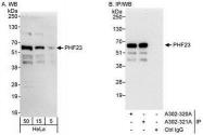 NBP1-28747 - PHF23