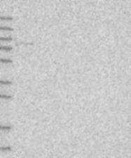 NBP1-80899 - PRKCH