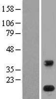 NBL1-14471 - PLA2G1B Lysate