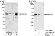 NBP1-28737 - POLR3D