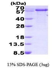 NBP1-41225 - PPIL2