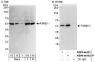 NBP1-46191 - PSMD11