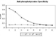 NB600-907 - Phosphotyrosine