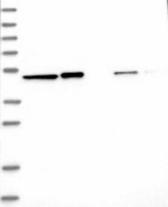 NBP1-87992 - QRSL1