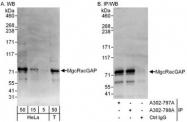 NBP1-47267 - RACGAP1