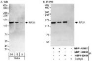 NBP1-52652 - RFX1