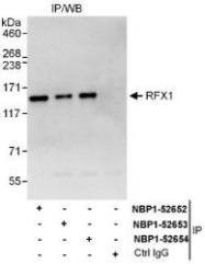 NBP1-52653 - RFX1