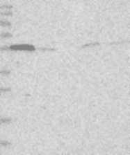 NBP1-80854 - RIN2