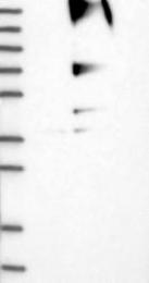 NBP1-83212 - RNF139