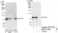 NBP1-71822 - RRN3