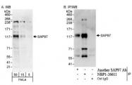 NBP1-26611 - DLG1