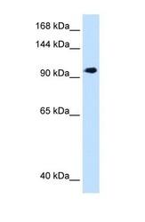 NBP1-59694 - SEC63