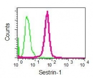 NBP1-96045 - Sestrin-1 (SESN1)