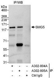 NBP1-47272 - SMG5