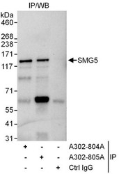 NBP1-47273 - SMG5