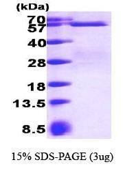 NBP1-30284 - SMAD3